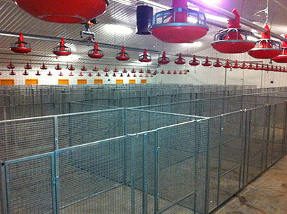 Wire mesh poultry cages poultry unit poultry farm cages made in the uk gavinised wire mesh poultry show cage